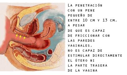 imagem de um pênis pequeno estimula a xoxota
