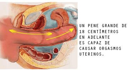imagem de um pênis maior estimula a parte de trás da vagina e do útero
